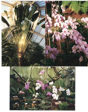 Kew_garden_2